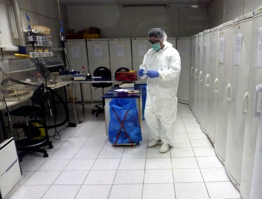 Preparing DNA samples at the ICMP lab in Tuzla